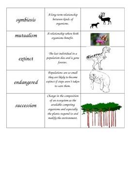 Ecosystem Vocabulary Flashcards