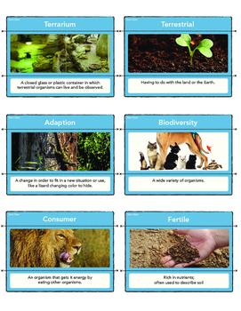 Ecosystem Vocabulary Matching Cards- STEM Activity!