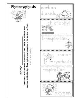 Ecosystem Vocabulary - Photosynthesis