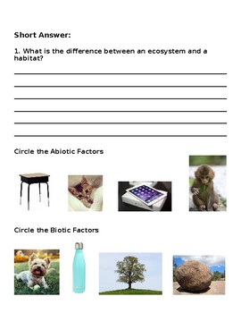 Ecosystem Vocabulary Quiz with Answer Key