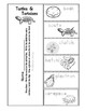 Ecosystem Vocabulary - Turtles and Tortoises