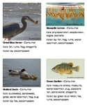 Ecosystem or food web cards - producers, consumers, decomposers