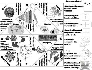 Ecosystems Activity: Population, Food Web, World Biomes and Habitats etc