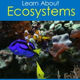 Ecosystems Activity