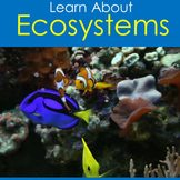 Ecosystems   1st 2nd 3rd 4th 5th 6th Grade   PowerPoint Activity