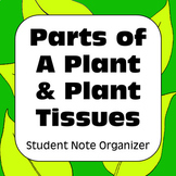 Parts of a Plant & Plant Tissue Types: Graphic Organizer for High School Notes