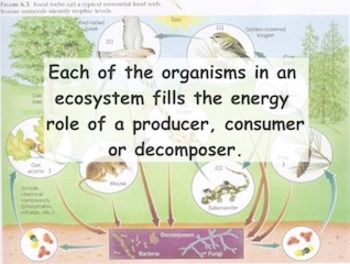 Ecosystems & Adaptations