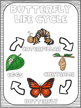 Ecosystems: Animal Life Cycles Flip Flap Book and Posters