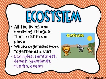 Ecosystems, Biomes, Food Chains & Food Webs Classroom Posters