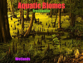 Ecosystems, Biomes, and Habitats - PowerPoint & Activities