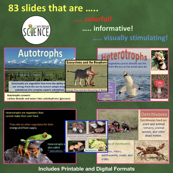 Ecosystems Bundle | Printable and Digital Distance Learning