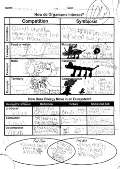 Ecosystems- Competition, Symbiosis, Food Chains & Webs Graphic Organizer