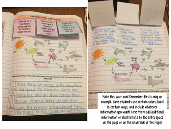 Ecosystems: Feeding Relationships Reading Comprehension Interactive Notebook