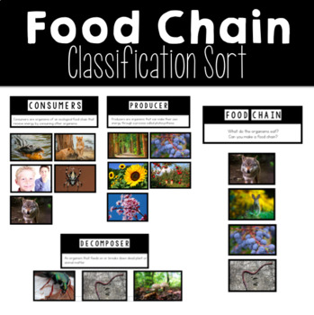 Ecosystems Food Chain Classification Sort