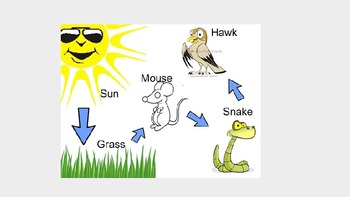 Ecosystems:  Food Chain, Food Web, Energy Pyramid