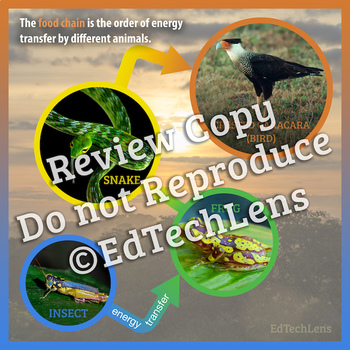 Ecosystems, Food Chains, and the Water Cycle: Graphic Organizers for Gr 1-2