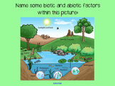 Ecosystems & Food Chains/Food Webs Smart Notebook