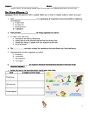 Ecosystems - Food Web Intro Lesson