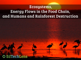 Rainforest Ecosystems, Food Chains, Humans, and Rainforest