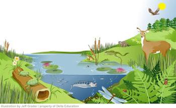 Ecosystems - NC CCS