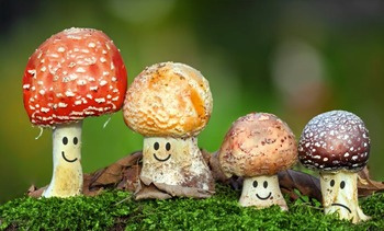 Ecosystems NGSS:Decomposers ❤ BUNDLE:Activity, Reading,Assessment—SALE