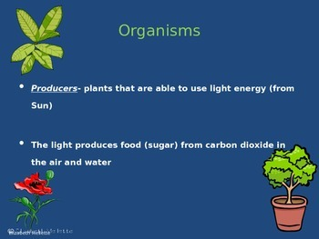 Ecosystems Power Point