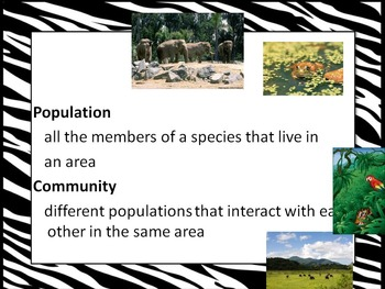 Ecosystems with Food Chains and Food Web Examples
