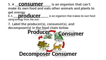 Ecosystems - Role of the Consumer PPT