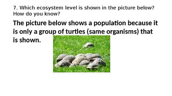 Ecosystems - Roles in a Food Chain & Web PPT