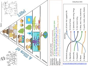 Ecosystems Vocabulary Graphic Organizer