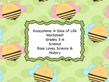 Ecosystems Vocabulary Graphic Organizer