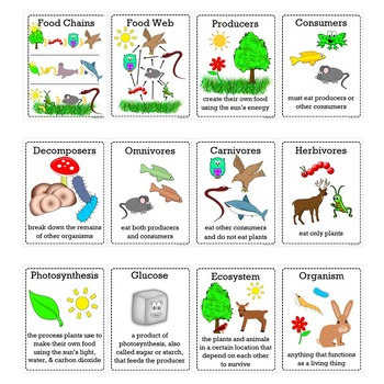 Food Chains and Food Webs Vocabulary