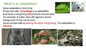 Ecosystems and Adaptation