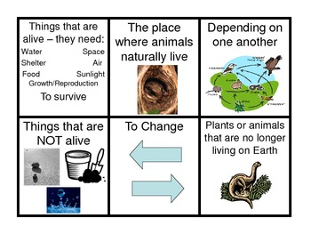 Ecosystems and Adaptations Cards