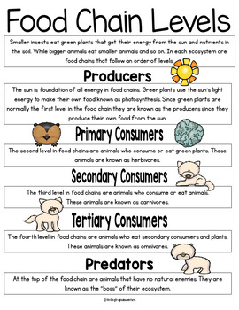 Ecosystems and Food Chains