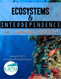 Ecosystems and Interdependence for Interactive Notebooks (