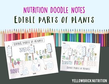 Edible Parts of Plants Doodle Note, Color Handout, Printable
