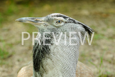 Stock Photo: Exotic Wild Bird -Personal & Commercial Use