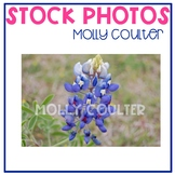 Stock Photo Styled Image: Bluebonnet -Personal & Commercial Use