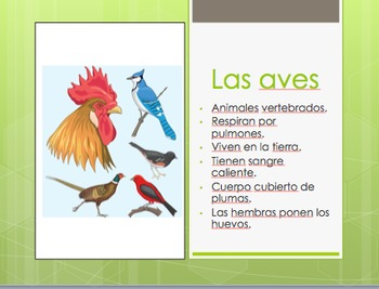 Editable Animal Classification PowerPoint in Spanish
