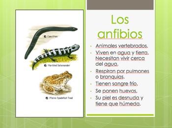 Editable Animal Classification PowerPoint in Spanish