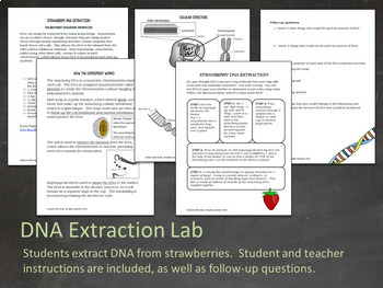 DNA & RNA Bundle-  PowerPoint, Notes, Activities, Centers, Task Cards, & Test