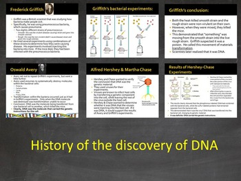 Editable DNA PowerPoint- History, Structure, RNA, Transcription, Translation