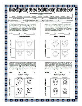 Editable Heredity and Punnett Squares Worksheet
