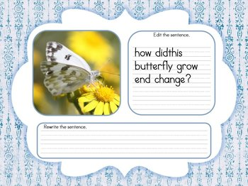 Editing Spring Sentences Daily Writing Activity (Smartboard/Promethean Board)