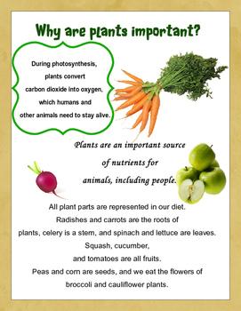 Education Club Magazine: Super Seed: a mini lesson on plants