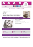 """Interactive lesson for study. Case """"Cats and cats mania"""""""