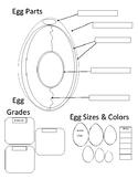 Egg Diagram/Handout