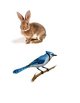 Egg Inquiry - Animal Sort