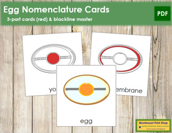 Egg Nomenclature Cards (Red)